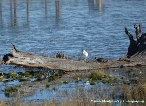 White Bird & Turtle on Log with MMP x2